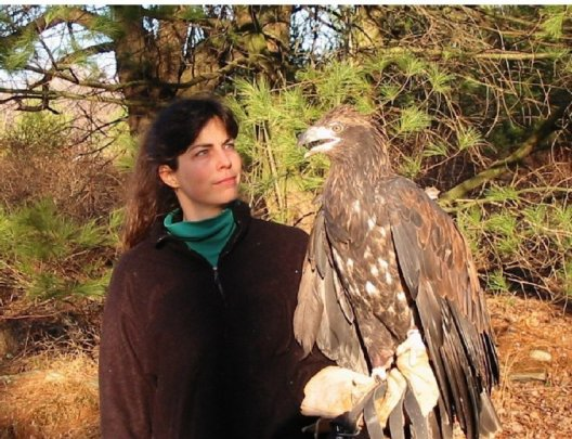 Jan and immature bald eagle