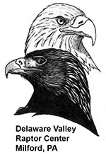 Delaware Valley Raptor Center Link