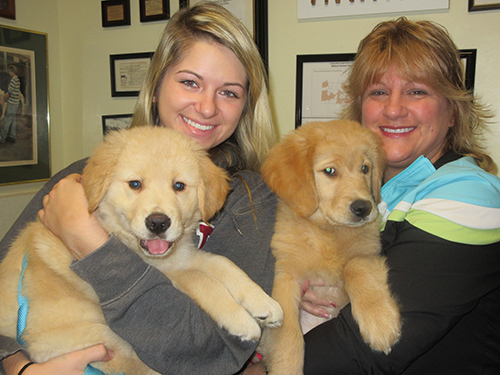 Two Golden Retriever Pups with their owners