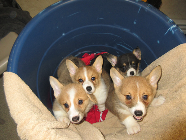 Puppies in a tub